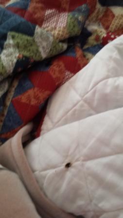 Northeaster Motel: Cigarette burn in blanket