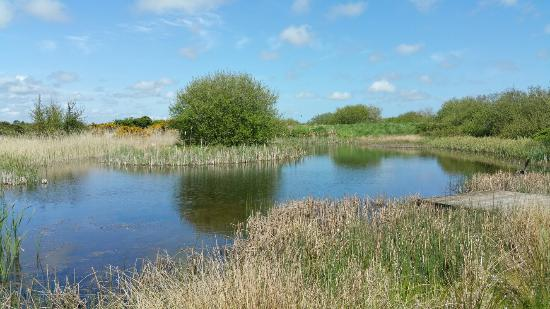 Wexford Wildfowl Reserve