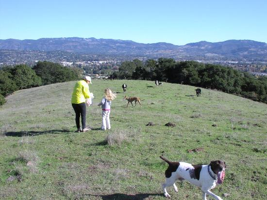 Westwood Hills Park: Top of Westwood Hills. With cows