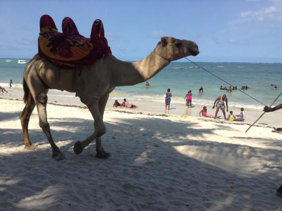 Milele Beach Hotel: CAMEL BACK RIDES