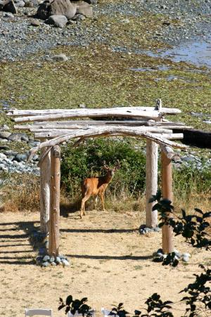 Sea Breeze Lodge: A deer at the alter
