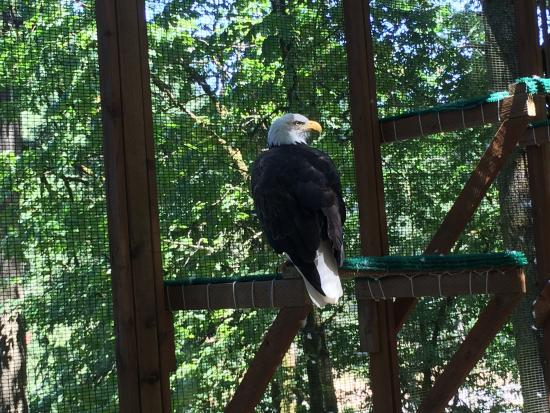 Eugene, OR: Beautiful Birds & Very Educational