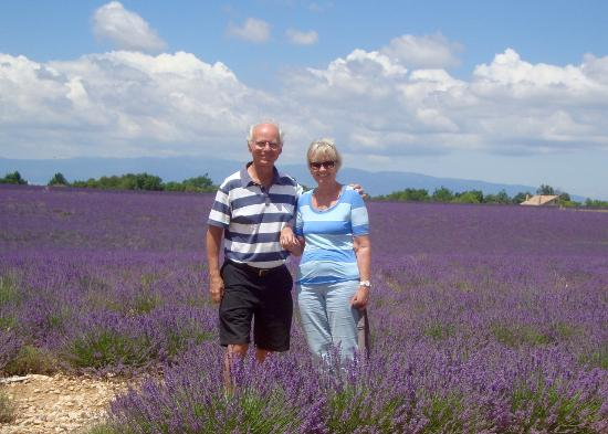 Pont Royal, France: Lavander fields forever