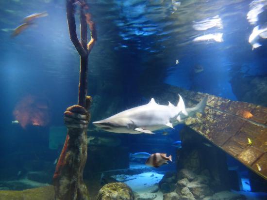 Exhibition Center Long Island Aquarium