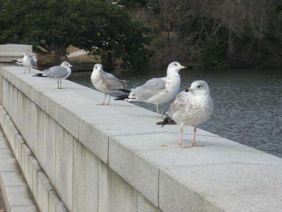 Newport News, Wirginia: Gulls on the Lions Bridge
