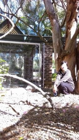 Penny Lane Gardens Restaurant: a tangled old tree in Penny Lane