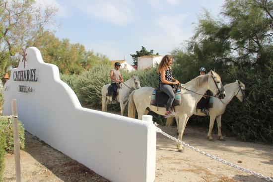 Hotel de Cacharel : Horses