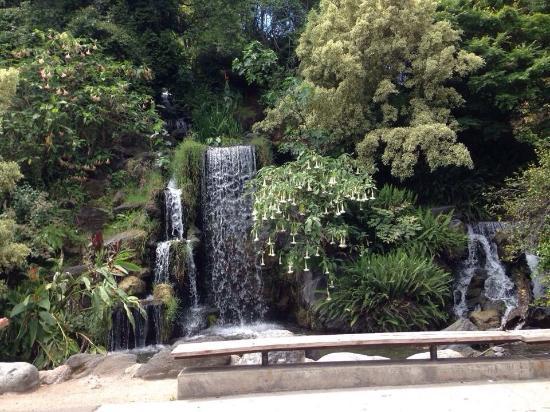 Arboretum Veiw Picture Of Los Angeles County Arboretum Botanic Garden Arcadia Tripadvisor