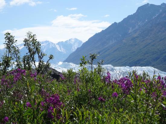 Homestead Guest Cabins: Matanuska Glacier