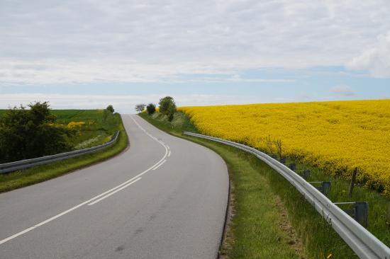 Thyholm, Дания: Живописные рапсовые поля по дороге к ресторану