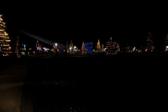 Christmas Lights At Victoria Park Picture Of