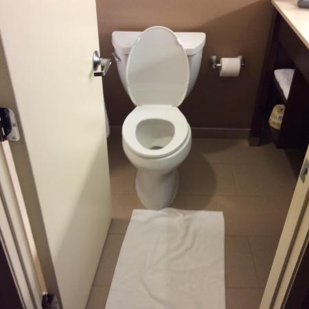Sheraton Ann Arbor Hotel: Seriously!