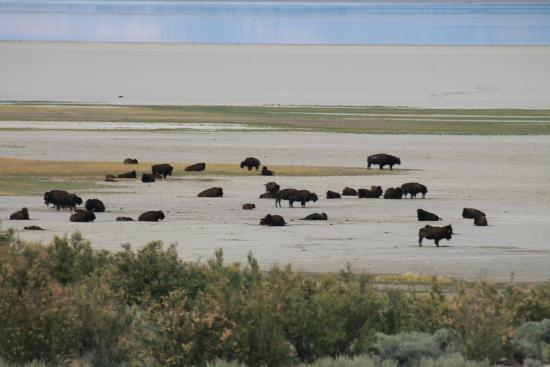 Antelope Island State Park Reviews