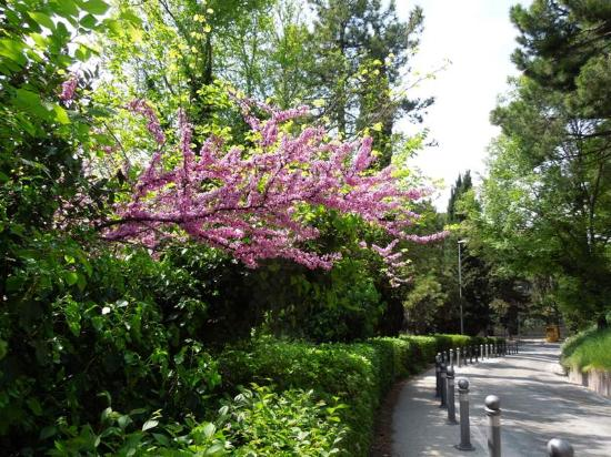 Giardini curati vicino al centro recensioni su giardini - Giardini curati ...