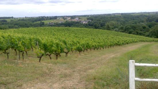 Château Soucherie : Promenade dans les Vignes
