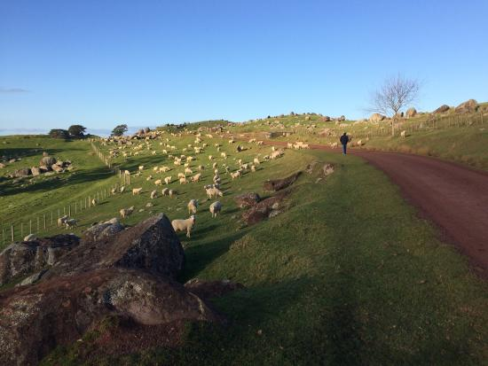 Остров Уаихеке, Новая Зеландия: photo0.jpg
