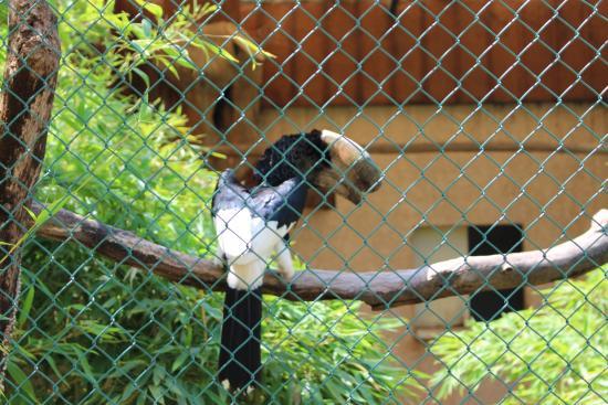 Beaucoup D Oiseaux Photo De Jardin Zoologique Tropical La Londe
