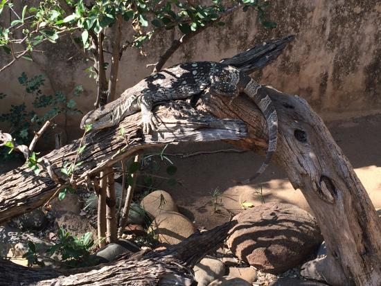 Kinyonga Reptile Center