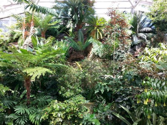Inside The Palm House Picture Of Brooklyn Botanic Garden Brooklyn Tripadvisor