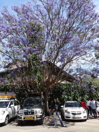 Nahar's Nilgiris Hotel: trees