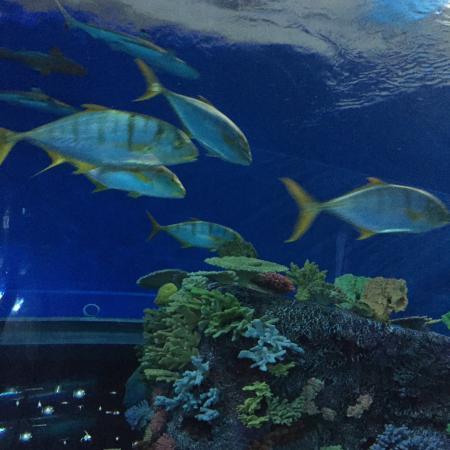 ... de Den Bla Planet, National Aquarium Denmark, Kastrup - TripAdvisor