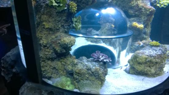 The first fish tank with the dome picture of skegness for First fish tank