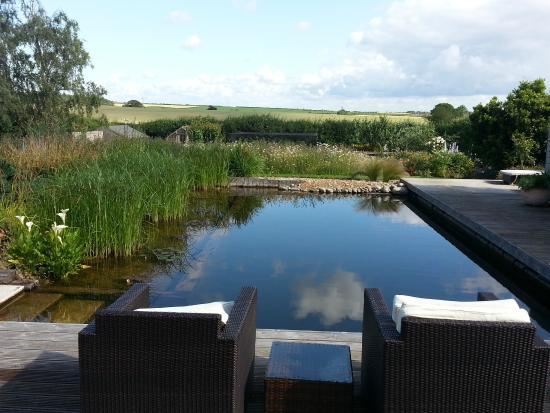 Longview B&B: Backyard of pool, gardens, lovely patio furniture and view!
