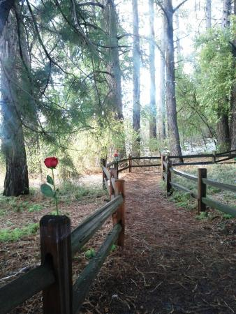 Oak Glen, CA: Proposal at the end of the nature trail