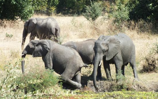 Bilimungwe Bushcamp - The Bushcamp Company: Elephants in the watering hole