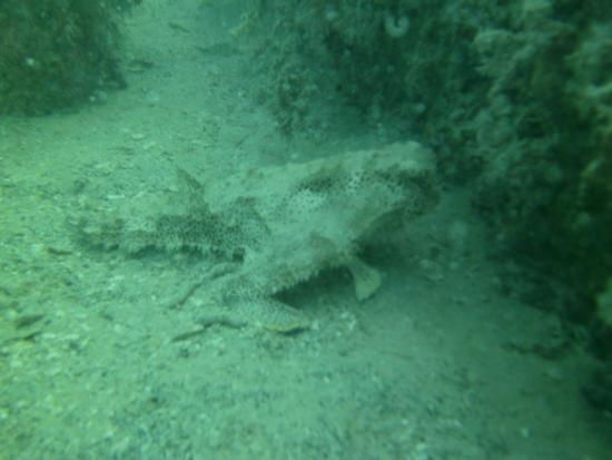 Florida Underwater Sports: This fish blends into the sediment well.