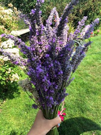 Purple Scent Lavender Farm (Bremerton) - 2019 All You Need