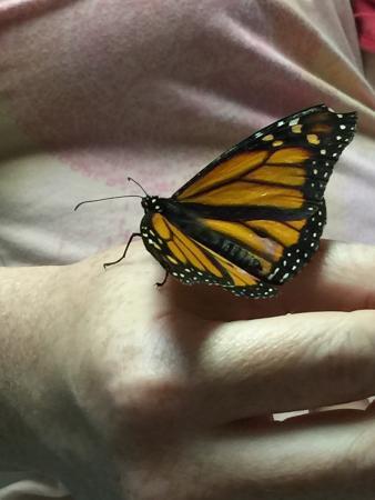 Bear Mountain Butterfly Sanctuary: photo0.jpg