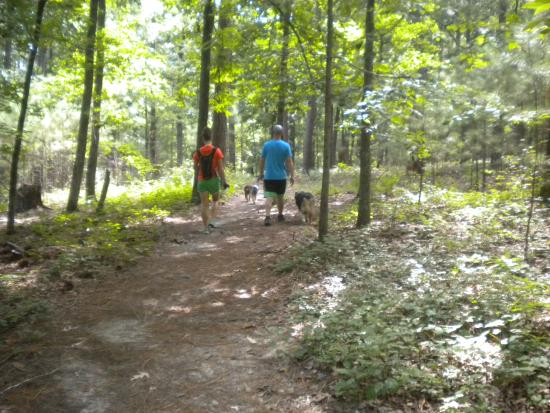 Trails and trails!! - Picture of Harbison State Forest, Columbia ...