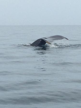 Petit Pasage Whale Watch : Tailshot