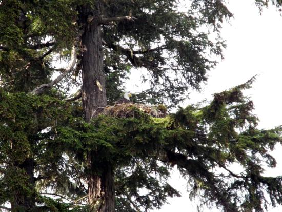 Huna Outfitters: Eagle's Nest