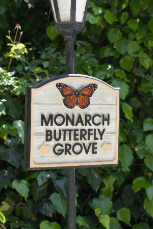 Monarch Cove Inn: Monarch Butterfly Grove Onsite