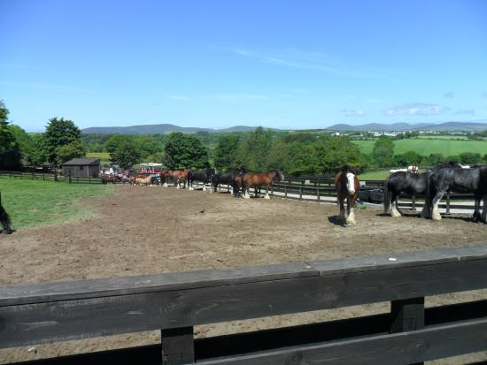 Home of Rest of Old Horses: Just a few of the horses