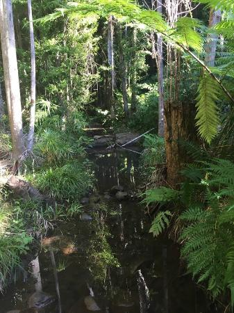 Buderim, Australia: Boardwalk follows creek