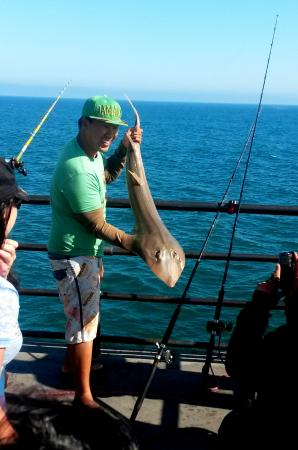Huntington Beach Pier Fisherman Catches Shovelnose Sand Shark