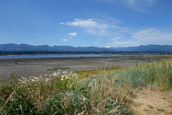 Courtenay, كندا: Comox estuary & Queneesh Glacier