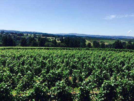 Ponzi Wine Bar: The spectacular views from Ponzi