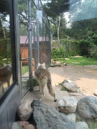 Ely, MN: International Wolf Center