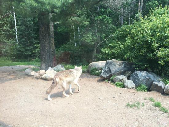 Ely, MN: International Wolf Center