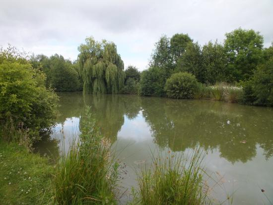 Thorney lakes caravan camping park updated 2017 for Fishing lakes near me