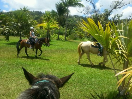 Kilauea, Hawái: photo2.jpg