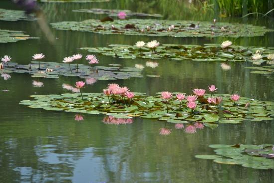 Hamanako Garden Park : 夏季の見どころ『花の美術館』印象派の絵の中に佇んでいるかのような場所です。(7月)