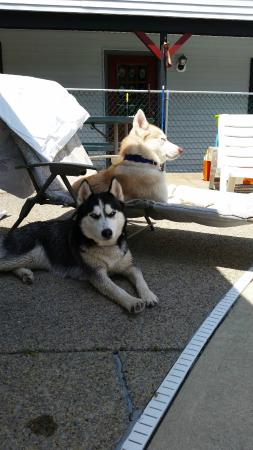 Colonial Court Motel: Kaya and Meeko sun and shade bathing