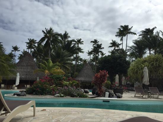 Bora Bora Pearl Beach Resort & Spa: Photos of hotel and hotel cat