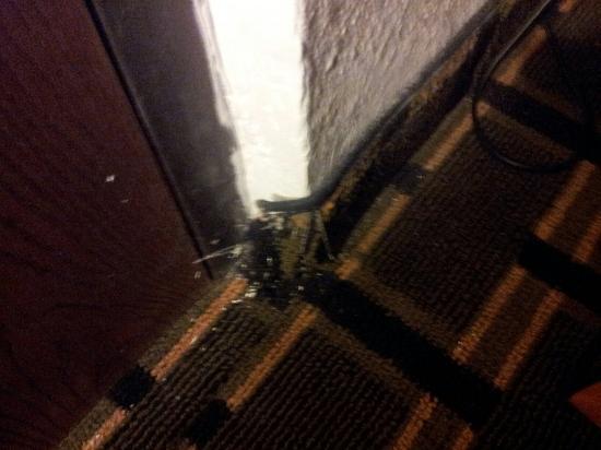 Motel 6 Concord - Kannapolis: Carpet