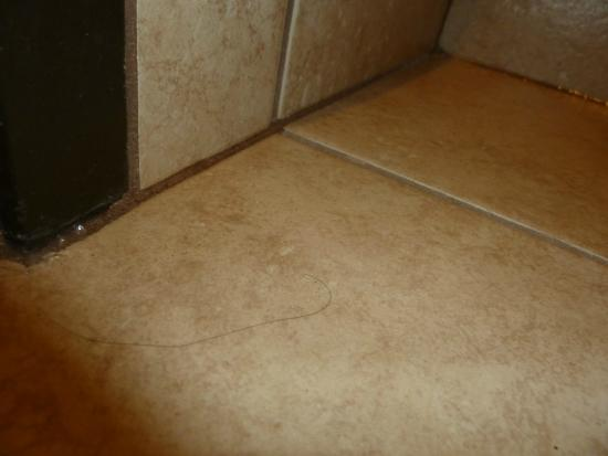 Ramada Wisconsin Dells: bathroom floor where i found the hair strand
